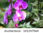 beautiful orchid | Shutterstock . vector #101247064