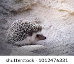 hedgehogs  standing on the sand | Shutterstock . vector #1012476331