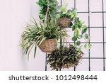 arrangement of hanging wicker... | Shutterstock . vector #1012498444