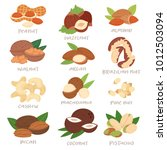 nut vector nutshell of hazelnut ... | Shutterstock .eps vector #1012503094