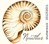 Vector Nautilus Sea Shell...