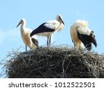 close up of stork nest with...   Shutterstock . vector #1012522501