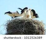close up of stork nest with...   Shutterstock . vector #1012526389
