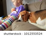 little girl and her beagle dog... | Shutterstock . vector #1012553524
