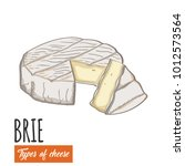 hand drawn colorful brie cheese   Shutterstock .eps vector #1012573564