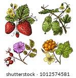 set berries. raspberry ...   Shutterstock .eps vector #1012574581