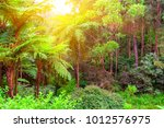 scenic view of jungle with... | Shutterstock . vector #1012576975