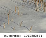 snow surface and lot of dry... | Shutterstock . vector #1012583581