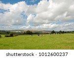 cattle grazing near hergest... | Shutterstock . vector #1012600237