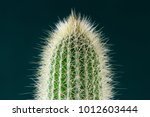spiny cactus close up for... | Shutterstock . vector #1012603444