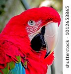 red macaw profile... | Shutterstock . vector #1012653865