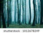 foggy  sunny morning in summer... | Shutterstock . vector #1012678249