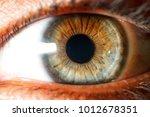 Beautiful Green Eyes Close Up