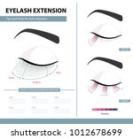 eyelash extension guide.... | Shutterstock .eps vector #1012678699