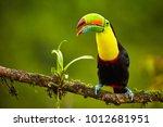 portrait of keel billed toucan  ... | Shutterstock . vector #1012681951
