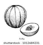 fruit  illustration hand drawn... | Shutterstock .eps vector #1012684231