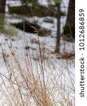 wild grass in winter | Shutterstock . vector #1012686859