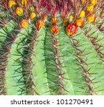 Cactuses In Lanzarote  Spain...