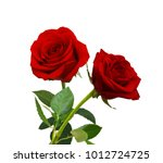 Stock photo red rose isolated on white background 1012724725