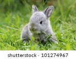 Stock photo baby grey rabbit in grass 101274967