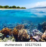coral reef in clear sea of the... | Shutterstock . vector #101275261