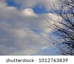 Puffy Clouds Behind Tree