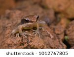 close up image of a northern... | Shutterstock . vector #1012767805