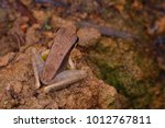 close up image of a northern... | Shutterstock . vector #1012767811