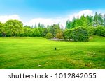 green forest grass in the park | Shutterstock . vector #1012842055