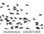 bohemian waxwing  bombycilla... | Shutterstock .eps vector #1012871404
