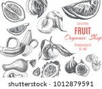 vector illustration sketch  ... | Shutterstock .eps vector #1012879591