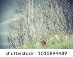 spring holiday vintage... | Shutterstock . vector #1012894489