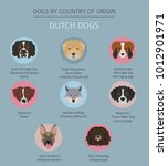dogs by country of origin.... | Shutterstock .eps vector #1012901971