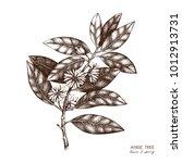 botanical illustration of... | Shutterstock .eps vector #1012913731