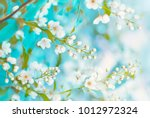 floral spring background  soft... | Shutterstock . vector #1012972324