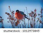 bullfinches on the branch | Shutterstock . vector #1012973845