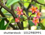 white   pink and yellow... | Shutterstock . vector #1012980991