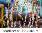 Birch Branches Covered With Ice