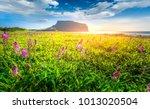 purple grass flower at... | Shutterstock . vector #1013020504
