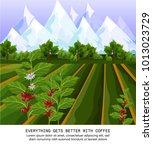 coffee beans growing in farm.... | Shutterstock .eps vector #1013023729