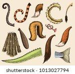 animal tail vector animalistic... | Shutterstock .eps vector #1013027794