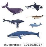 sea mammals  cetacea  ... | Shutterstock .eps vector #1013038717