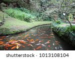 koi at the byodo in temple on... | Shutterstock . vector #1013108104