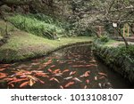 koi pond at the byodo in temple ... | Shutterstock . vector #1013108107