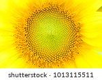 Close Up Of Sunflower Texture....