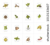 vector set design colorful... | Shutterstock .eps vector #1013133607