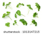 leaves of parsley isolated on... | Shutterstock . vector #1013147215
