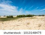 sand landscape in danube delta  ... | Shutterstock . vector #1013148475