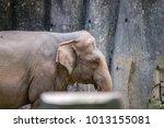 female friendly endangered... | Shutterstock . vector #1013155081
