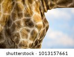 beautiful close up of the...   Shutterstock . vector #1013157661